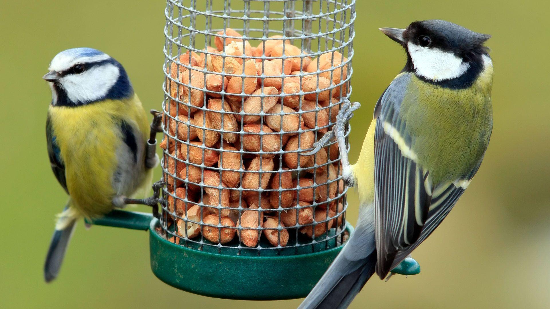 Vögel füttern: Das sind die 5 größten Fehler