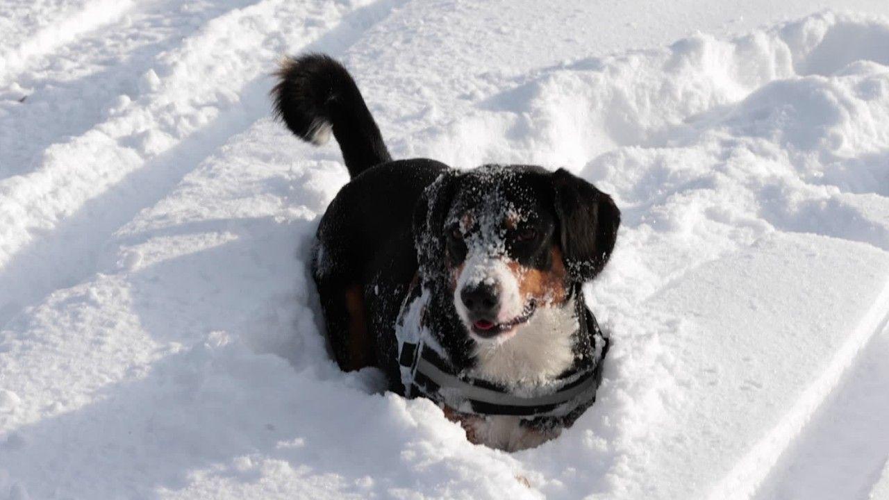 Hundebesitzer aufgepasst: Das sind die Gefahren im Winter
